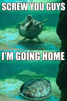 Funny Going Home Turtle