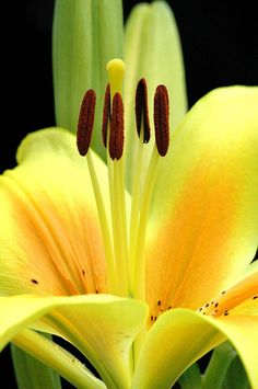 Flowers I grow up north......sapphire1707:    Yellow flower by CGoulao on Flickr.