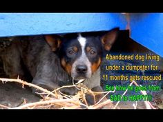 Cowboy was abandoned and lived under a dumpster.....