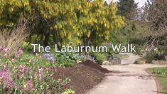 VanDusen Botanical Garden: The Laburnum Walk Cottage Gardens, Botanical Gardens, 21st Century, Walking, Plants, Beautiful, Walks, Plant, Hiking