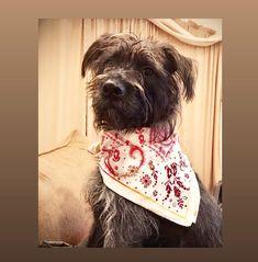 Tgif, Dog Wallpaper, Dog Modeling, Vizsla, Cute Gif, Cute Dogs, Halloween Costumes, Puppies, Pets
