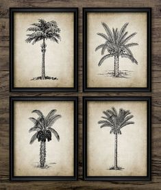 Palm Tree Print Set of 4 Vintage Palm Tree Botanical Art