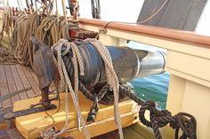 Tampa's Most Luxurious Sailing Cruise Sailing Cruises, Lynx, Boats, Luxury, Ships, Boating, Eurasian Lynx, Boat, Jungle Cat