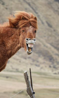 Laughing horse< I can hear the voice of Larry the Cable Guy coming out of its mouth.