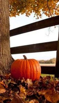 Autumn is Pumpkin Time Autumn Scenes, Fall Pictures, Fall Images, Pumpkin Pictures, Nature Pictures, Seasons Of The Year, All Nature, Foto Art, Autumn Photography