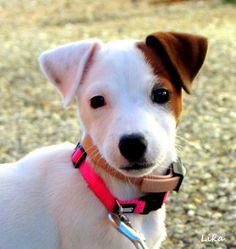 Os presentamos a Lika, una cachorra preciosa (perros) / We present Lika, a beautiful puppy (dogs) / Mediterranean Natural