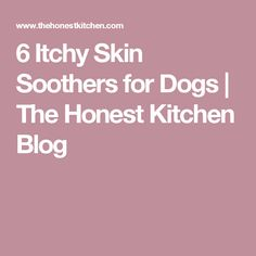 Watching your dog scratch himself all the time can be a miserable situation. Here are 6 natural skin soothers that can help an itching dog. Dog Obedience Classes, Medication For Dogs, Dog Shots, Coconut Oil For Dogs, Dog Itching, Homemade Dog, Dog Treats, Dog Food Recipes, Kitchen