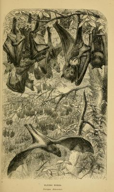 Sketches of the natural history of Ceylon : wit...