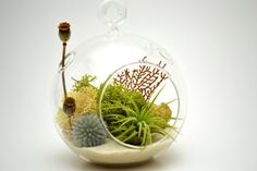 "FREE SHIPPING Small Air Plant Terrarium Kit with Countryside, Beach, Nautical Theme with 4"" Round Glass Globe"