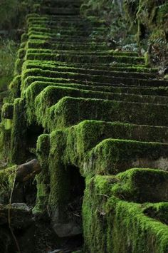 Mossy steps. Nature reclaims