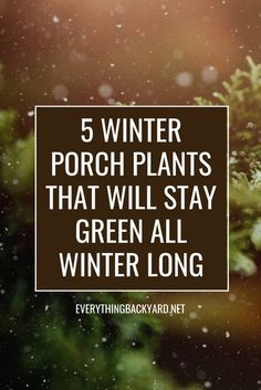 These porch plants will stay green all winter. Winter can be a little bleak and brown. These Winter porch plants will add some color and life back into your porch or patio. Front Porch Plants, Outside Plants, Balcony Plants, House Plants, Garden Plants, Potted Plants, Hanging Plants, Outdoor Winter Plants, Fall Plants