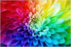 kleur- bloem waar zich een grote kleur explosie in plaats vindt, waarin je veel mooie soorten kleuren kunt herkennen waaronder rood, roze, blauw,groen en geel tinten.