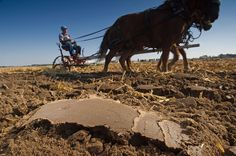 14 Dirty Photos That Show Why Soil Matters Picture of a horse plowing a field