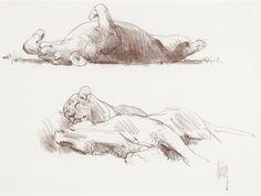 Bob Kuhn   Supine Lionesses   conte on paper