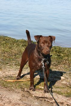 Patterdale Terrier at the lake