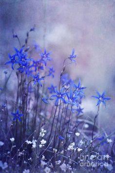 """Bluebell Heaven"" Nature Photograph by Priska Wettstein"