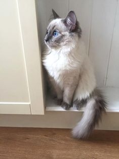 Hey there blue eyes ;) #cat #adorable
