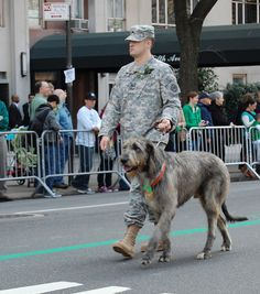 Irish Wolfhound | Flickr - Photo Sharing! I Love Dogs, Cute Dogs, Irish Elk, Dog Breed Info, War Dogs, Military Dogs, Irish Setter, Service Dogs, Funny Dogs