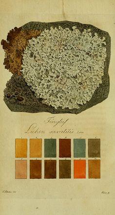 lichen color chart/