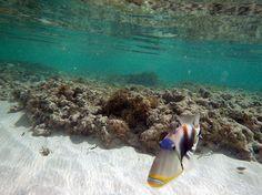 My Fav Fish Trigger Fish, Water, Outdoor, Art, Gripe Water, Outdoors, Art Background, Pisces, Kunst