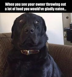 Funny Pictures Of The Day – 40 Pics More #funnydoghumor