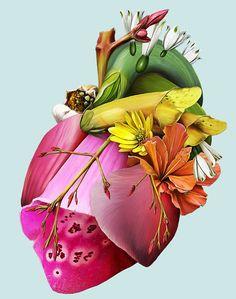 Cardiology-art: Heart of Flowers by Herr Mueller Heart Illustration, Botanical Illustration, Flower Prints, Flower Art, Heart Flower, Jean Arp, Max Ernst, Anatomical Heart, Heart Images