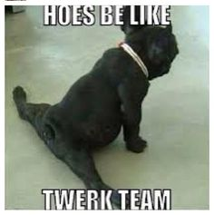 Wow! Twerk Team!
