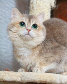 Meow!#котГеннадий  7(929)510-39-90... Follow us on Instagram :D #cats #cat #catlover #lovecats #funny #fun #cute #socute #feline #felines #felinefriend #fur #furry #paw #paws #kitten #kitty #kittens #kittycat #kittylove #fluffy #fluff