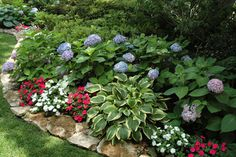 Pretty shade garden under tree with hydrangea, hostas, and impatiens.