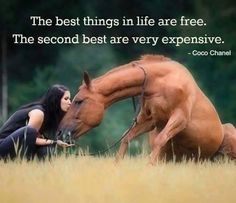 The best relationship in life is with Jesus. It cost Him his life, but it's free to us. But yes the second r horses and they r really expensive Pretty Horses, Horse Love, Horse Girl, Beautiful Horses, Animals Beautiful, Beautiful Cats, Inspirational Horse Quotes, Horse Riding Quotes, Equestrian Quotes