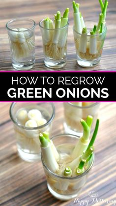 Have you been wondering how to re-grow green onions from scraps? It's surprisingly simple, and it makes a great indoors gardening lesson for the kids too! Get our tips for successfully growing green onions in water and in the garden. Regrow Green Onions, Green Onions Growing, Growing Greens, Growing Herbs, Planting Green Onions, Growing Spring Onions, Growing Vegetables Indoors, Regrow Vegetables, Herbs Indoors