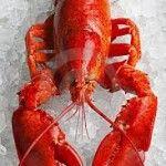 10 Frases com Lagosta Em Inglês | EnglishOk http://www.englishok.com.br/10-frases-com-lagosta-em-ingles/