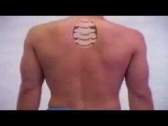Skeletal System - Human Body