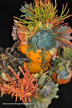 Perfect indoor decor for fall! I made them at the end of September last year and they looked great until I finally took them apart in January.  Repot the succulents and they'll still be good for the NEXT living arrangement! succulent pumpkin tutorial- JV Home  Garden Club http://club.conservationgardenpark.org/2012/10/seasonal-decor-diy-succulent-pumpkin-centerpiece/