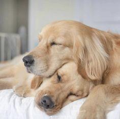 Sleeping Dogs Sleeping Dogs