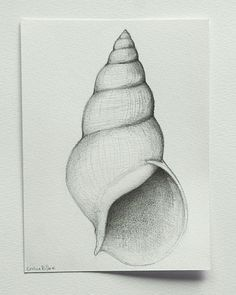 Contour lines and shading to create dimension. Shell number 2 Original pencil drawing on by SimpleArtStudio, €40.00