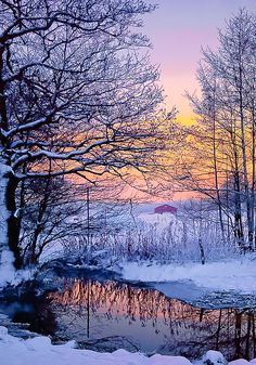 """coiour-my-world: """"Winter dawn in Sweden """""""