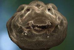 Microscopic photo of polliwog, (tadpole)  I always knew they were happy little guys!