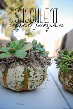 DIY Succulent Topped Pumpkin | Brass Jones