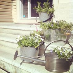 Potted flowers in old watering cans