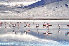 Chile, National Parks, Turismo, Nature, Chili Powder, Chilis