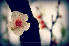 Welcome April~  καλό μήνα!      http://cheryl-ricebeanspastichio.blogspot.gr/2013/04/delicate.html