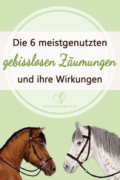 Likes, 169 Comments – The … – Art Of Equitation Bitless Bridle, Side Pull, Horse Riding Tips, Horse Facts, Western Riding, Natural Horsemanship, All About Horses, Hobby Horse, Horse Training