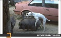 awkward+wedding+photos+dogs+humping | Dog Humping A Boar | Your Pet Hates You – Funny Animal Pictures ...