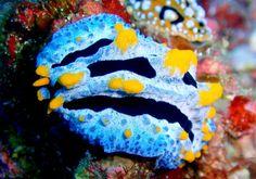Pequeñas y coloridas criaturas del mar