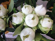 Lotusblumen in Bangkok