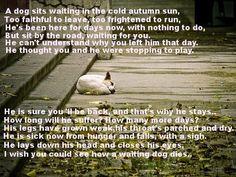 How a waiting dog dies :-(
