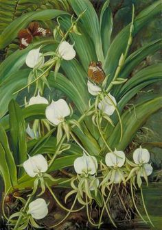 A Native Orchid and Butterflies, Mahé, Seychelles, Marianne North; c 1883; Oil on board; Collection: Royal Botanic Gardens, Kew, Richmond, Surrey, England