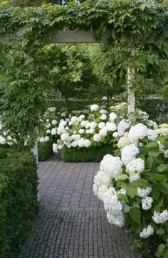 Can't have too many hydrangeas-love them Green and White Garden