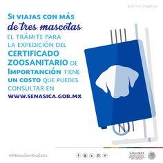 Si viajas con más de tres mascotas el trámite para la expedición del certificado zoosanitario de importación tiene un costo que puedes consultar en www.sensica.gob.mx